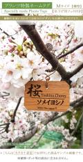 バラ ローズ ばら 薔薇 名札 ネームプレート  おしゃれ 名前 品種 ピック フック 文字 消えない ネームタグ ガーデニング 植物 雑貨